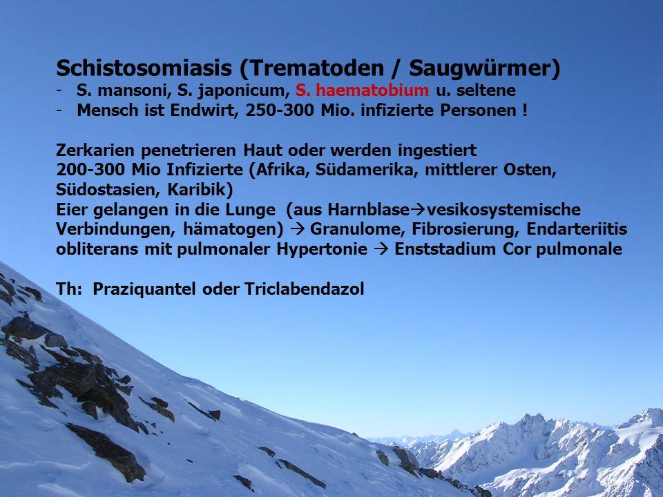 Schistosomiasis (Trematoden / Saugwürmer)