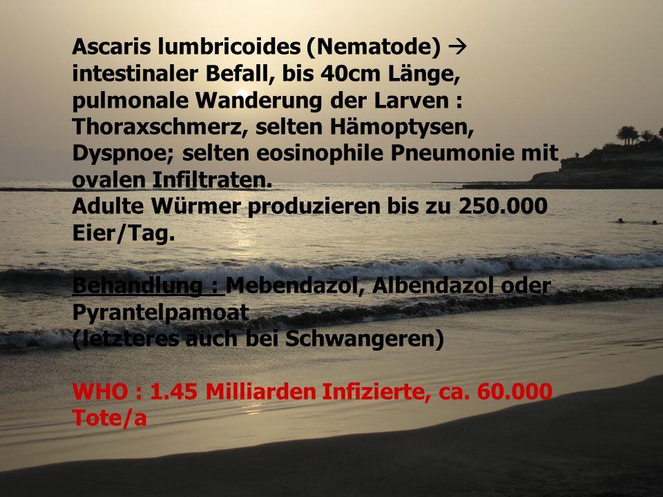 Ascaris lumbricoides (Nematode)  intestinaler Befall, bis 40cm Länge, pulmonale Wanderung der Larven : Thoraxschmerz, selten Hämoptysen, Dyspnoe; selten eosinophile Pneumonie mit ovalen Infiltraten.