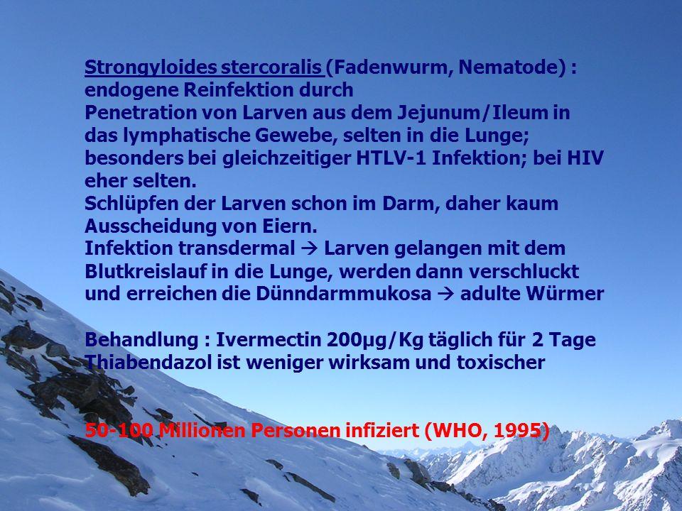 Strongyloides stercoralis (Fadenwurm, Nematode) : endogene Reinfektion durch