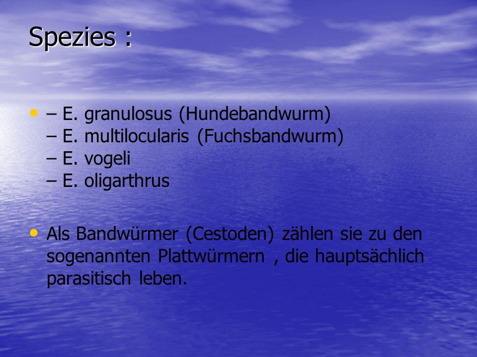 Spezies :– E. granulosus (Hundebandwurm) – E. multilocularis (Fuchsbandwurm) – E. vogeli – E. oligarthrus.