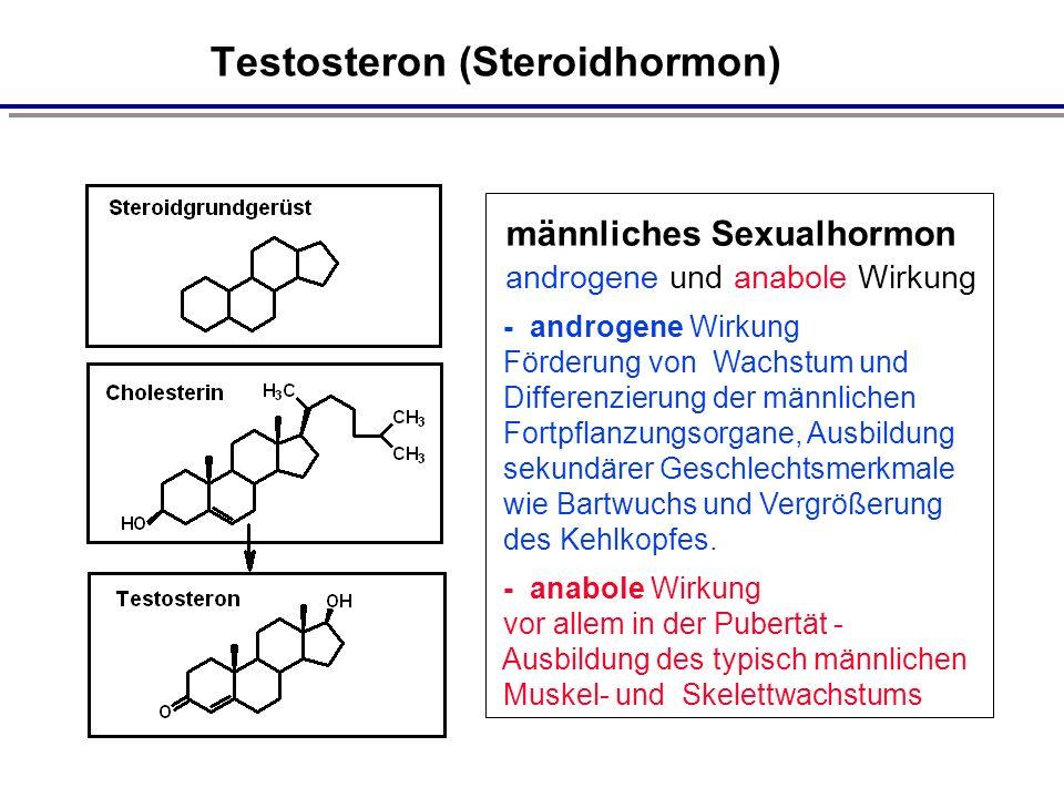 Testosteron (Steroidhormon)