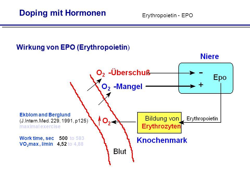 Wirkung von EPO (Erythropoietin)