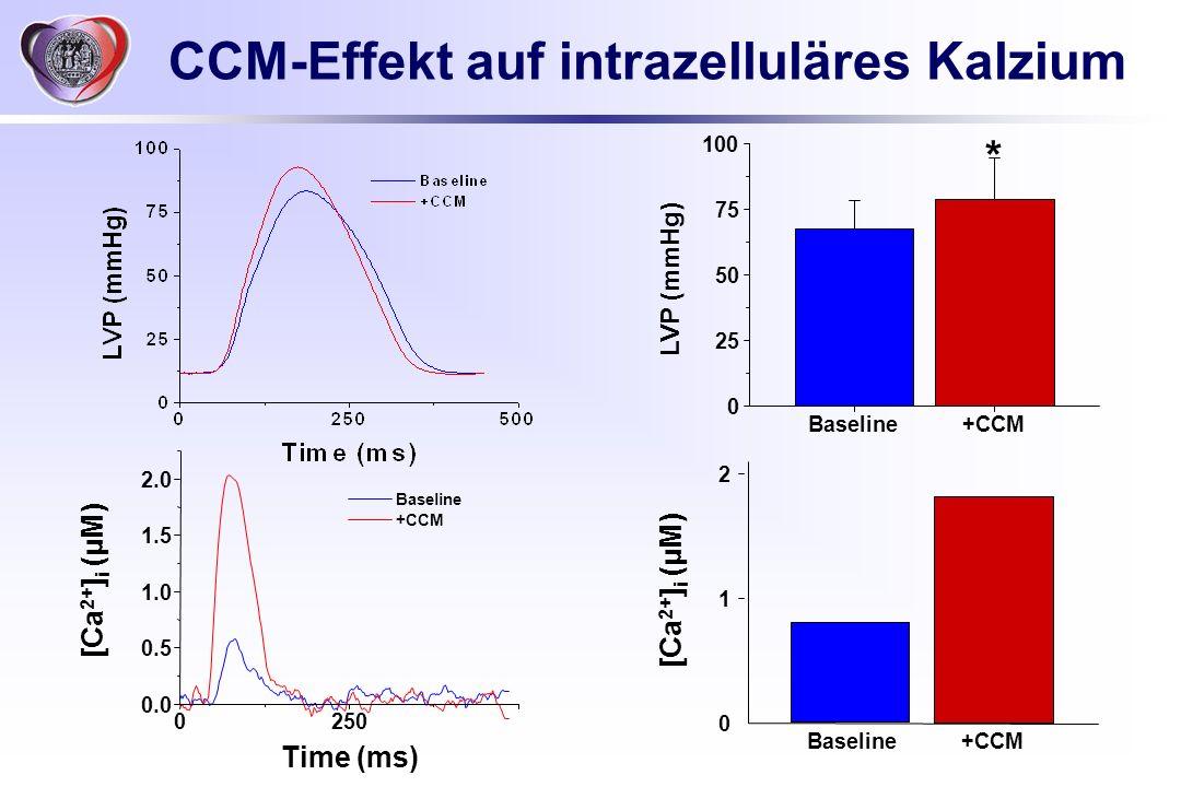CCM-Effekt auf intrazelluläres Kalzium