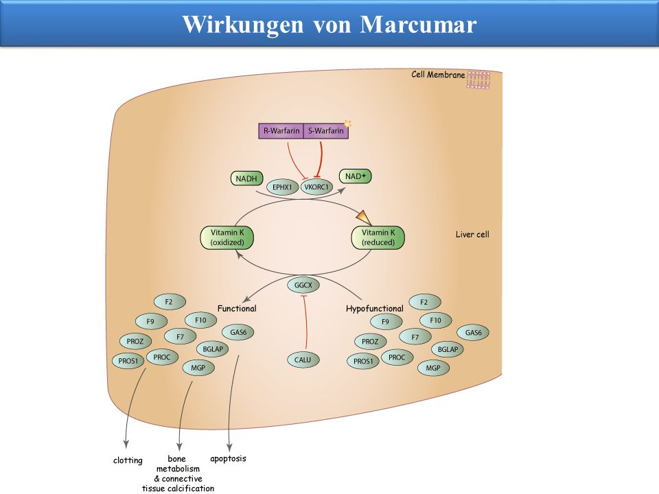 Wirkungen von Marcumar