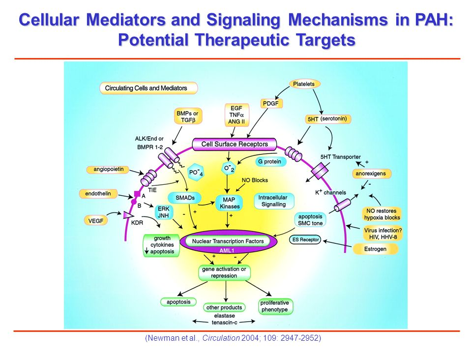 Cellular Mediators and Signaling Mechanisms in PAH:
