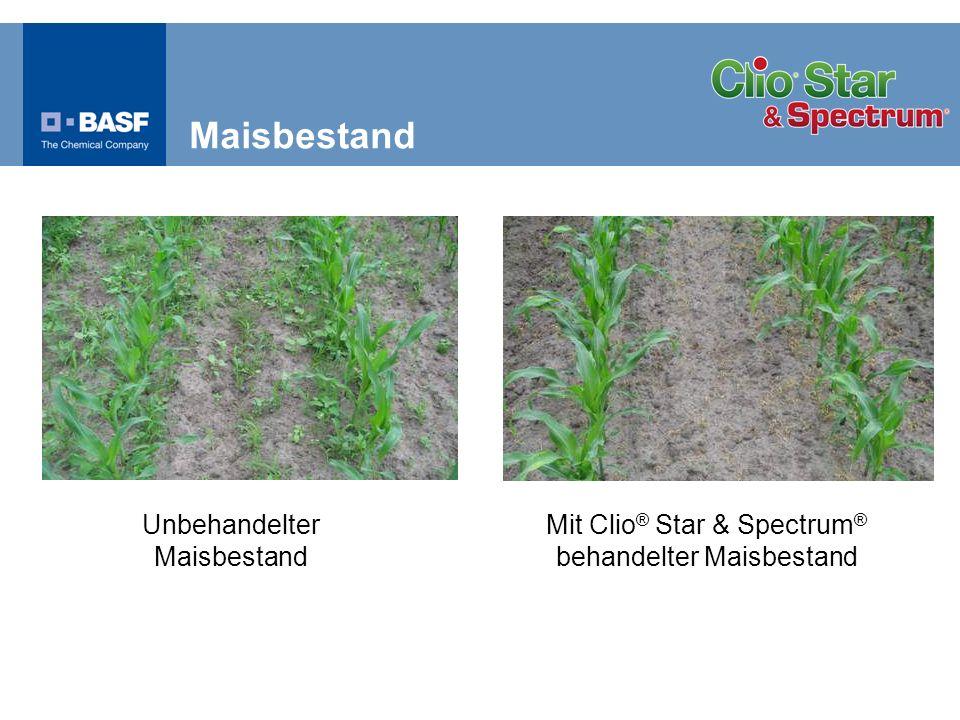 Maisbestand Unbehandelter Maisbestand