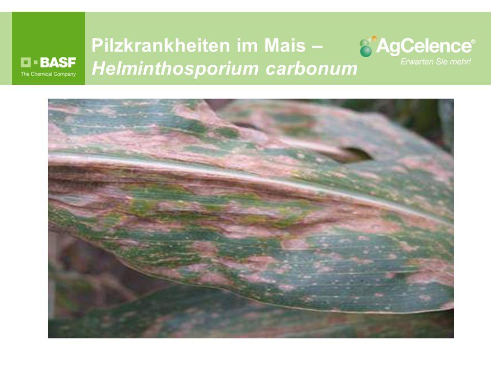 Pilzkrankheiten im Mais – Helminthosporium carbonum