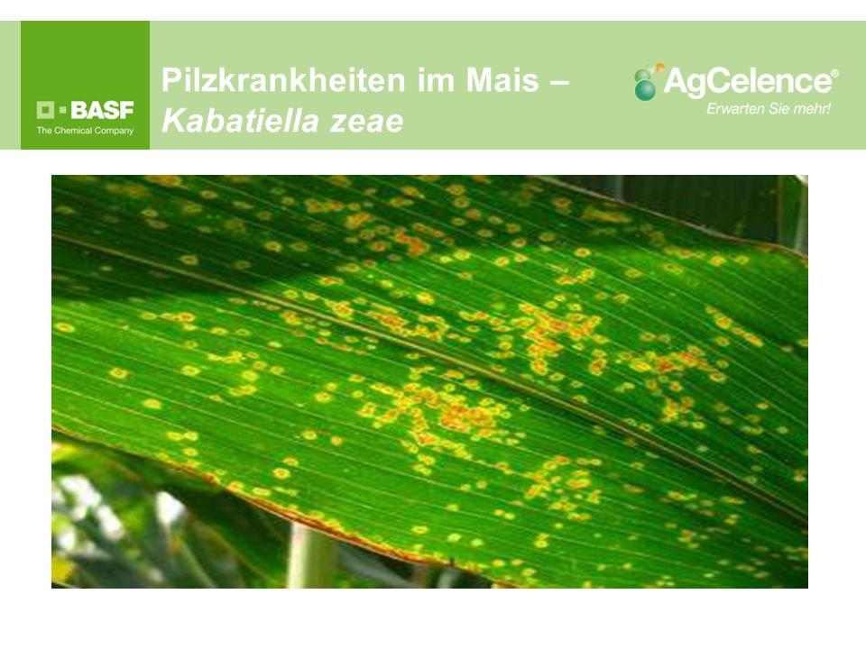 Pilzkrankheiten im Mais – Kabatiella zeae