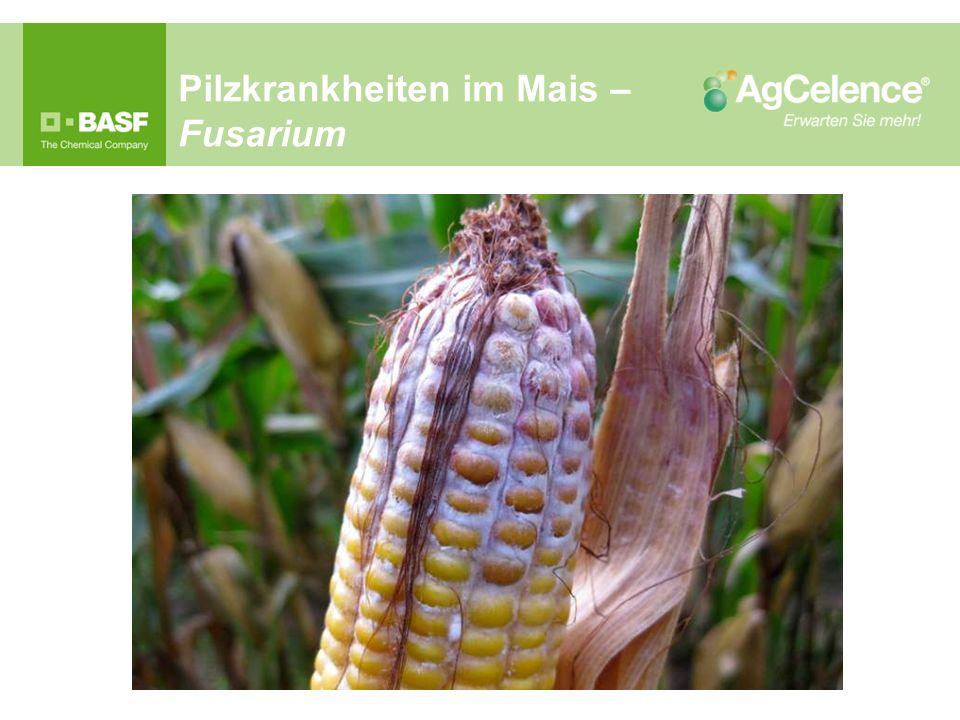 Pilzkrankheiten im Mais – Fusarium