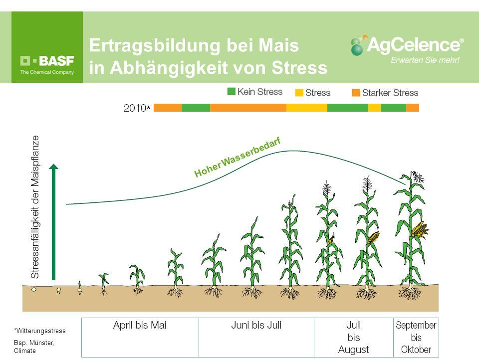 Ertragsbildung bei Mais in Abhängigkeit von Stress