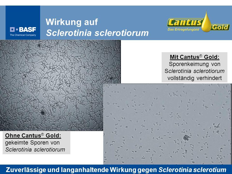 Zuverlässige und langanhaltende Wirkung gegen Sclerotinia sclerotium