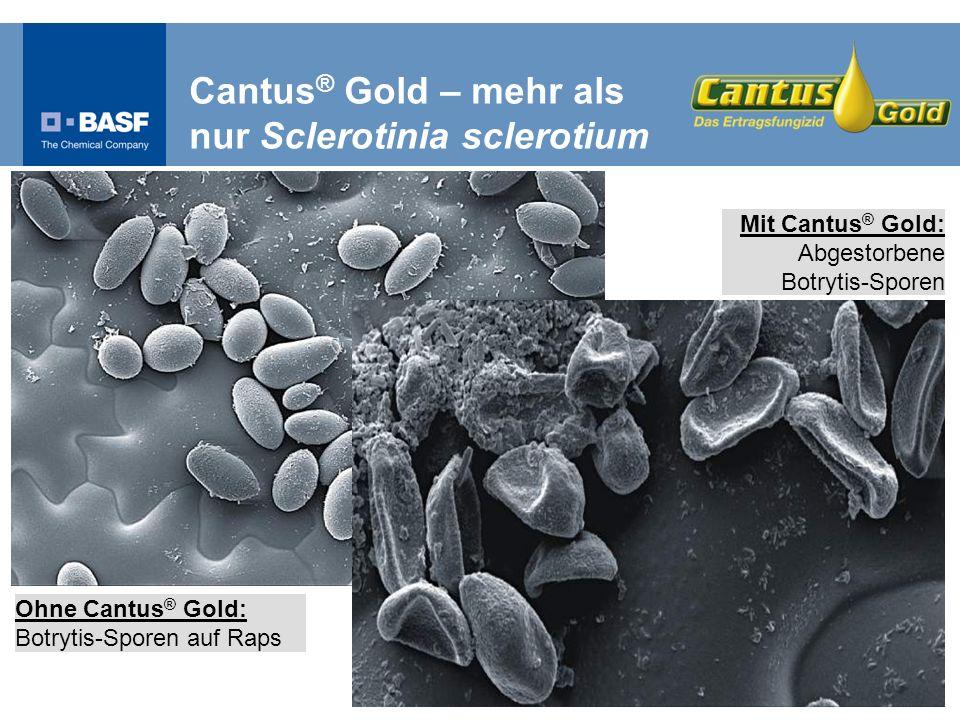 Cantus® Gold – mehr als nur Sclerotinia sclerotium