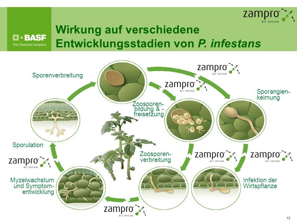 Wirkung auf verschiedene Entwicklungsstadien von P. infestans