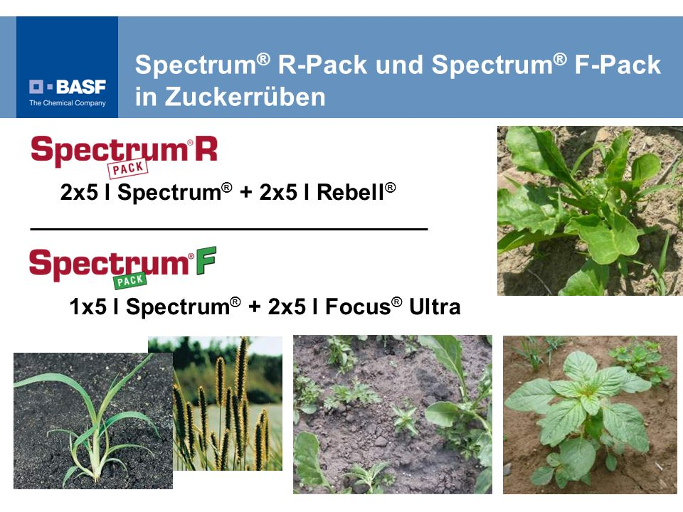 Spectrum® R-Pack und Spectrum® F-Pack in Zuckerrüben