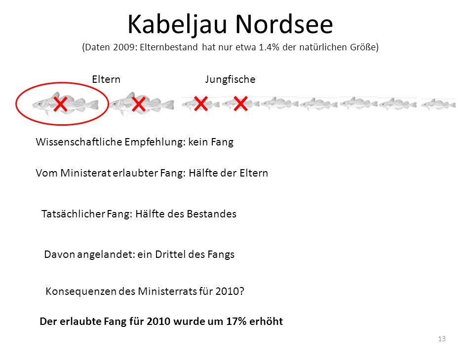 Kabeljau Nordsee (Daten 2009: Elternbestand hat nur etwa 1