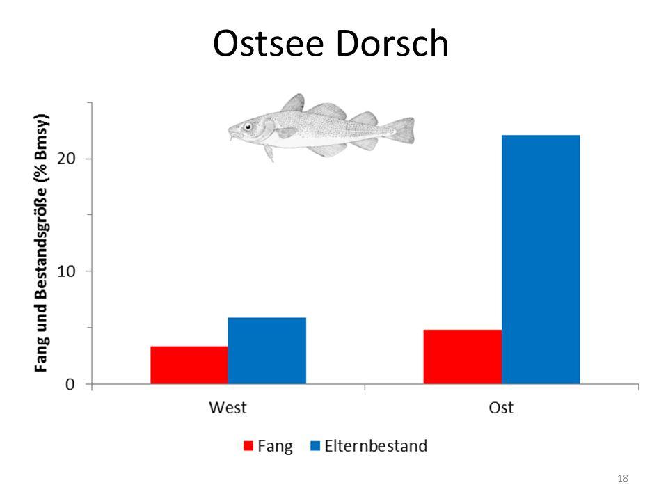 Ostsee Dorsch