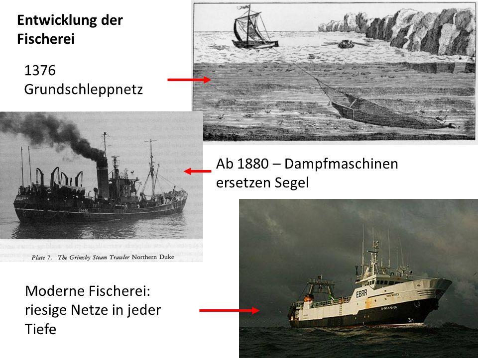 Entwicklung derFischerei.1376 Grundschleppnetz. Ab 1880 – Dampfmaschinen ersetzen Segel.