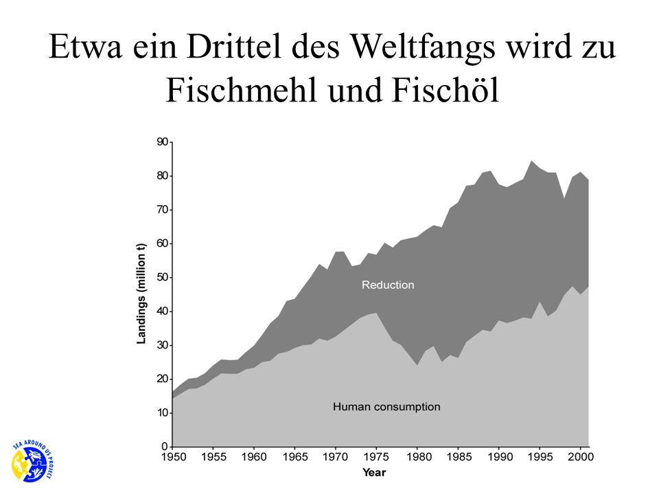 Etwa ein Drittel des Weltfangs wird zu Fischmehl und Fischöl