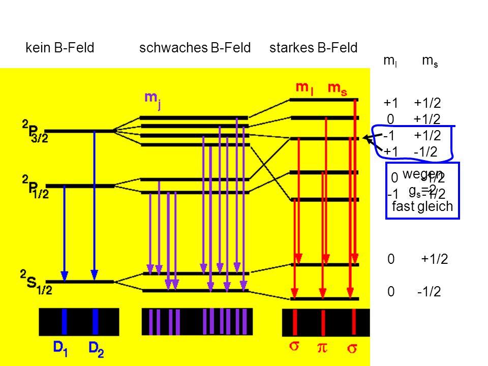 kein B-Feld schwaches B-Feld. starkes B-Feld. ml ms. +1 +1/2. 0 +1/2. -1 +1/2.