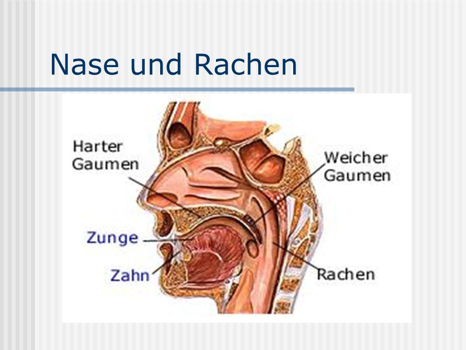 Nase und Rachen