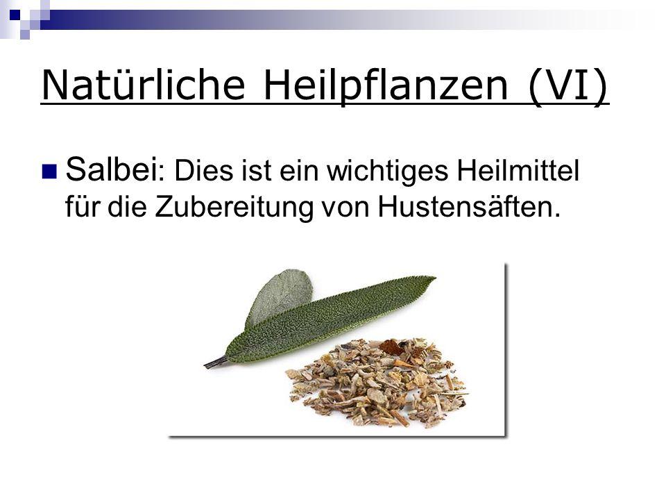Natürliche Heilpflanzen (VI)