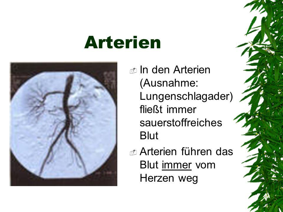 Arterien In den Arterien (Ausnahme: Lungenschlagader) fließt immer sauerstoffreiches Blut.