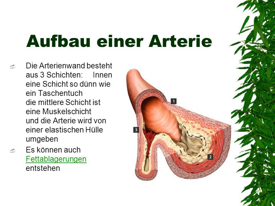 Aufbau einer Arterie