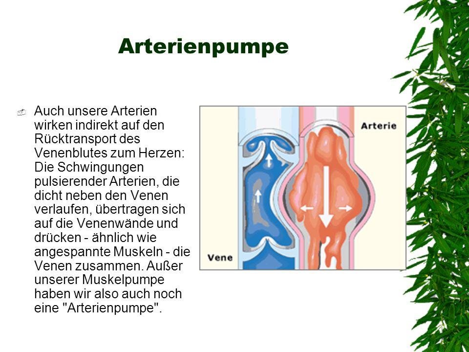 Arterienpumpe