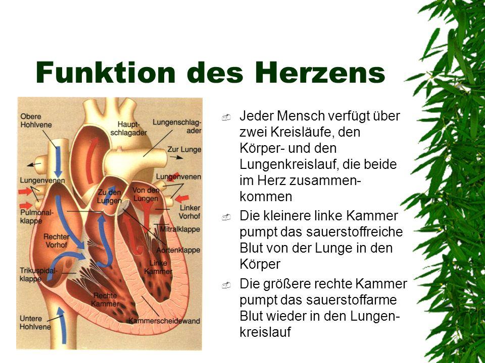 Funktion des Herzens Jeder Mensch verfügt über zwei Kreisläufe, den Körper- und den Lungenkreislauf, die beide im Herz zusammen-kommen.