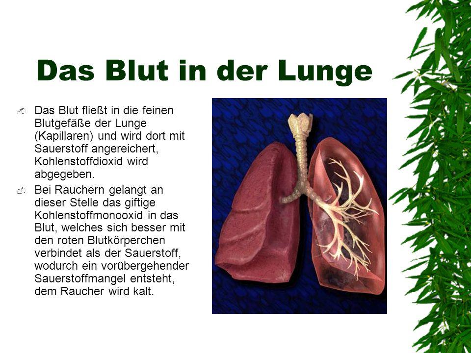 Das Blut in der Lunge
