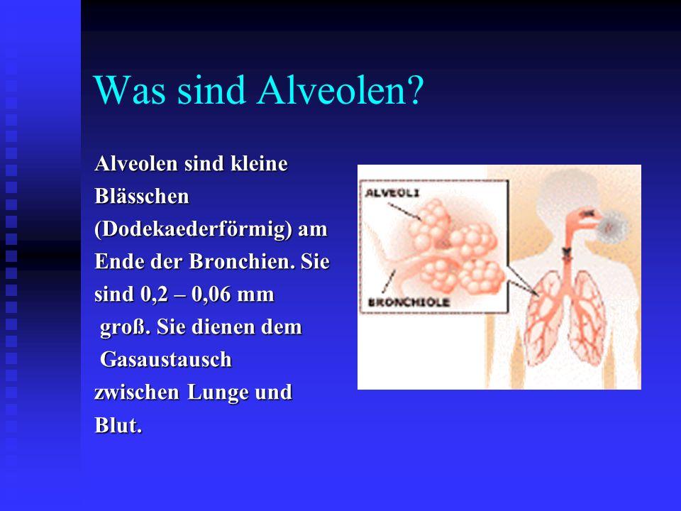 Was sind Alveolen Alveolen sind kleine Blässchen