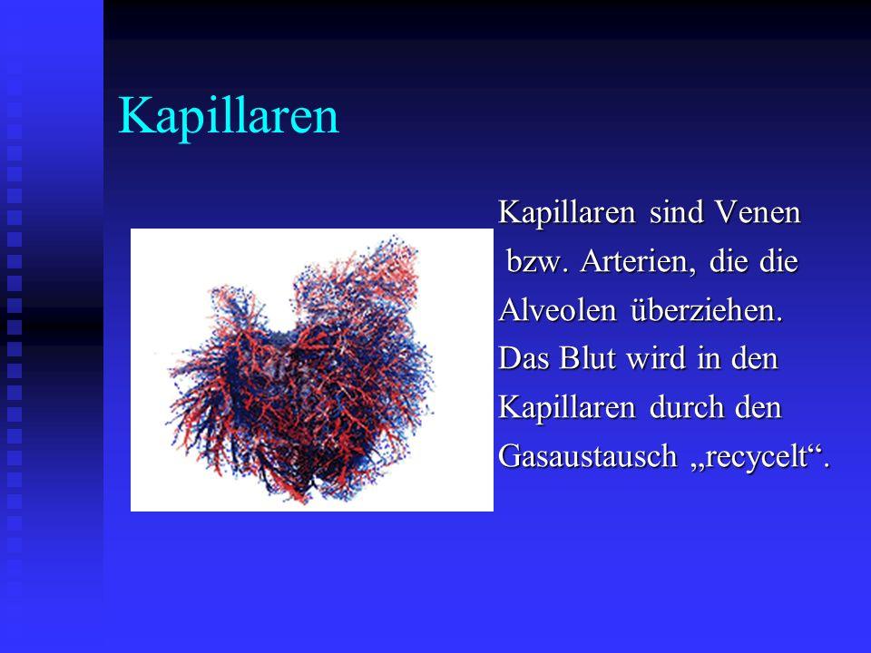 Kapillaren Kapillaren sind Venen bzw. Arterien, die die