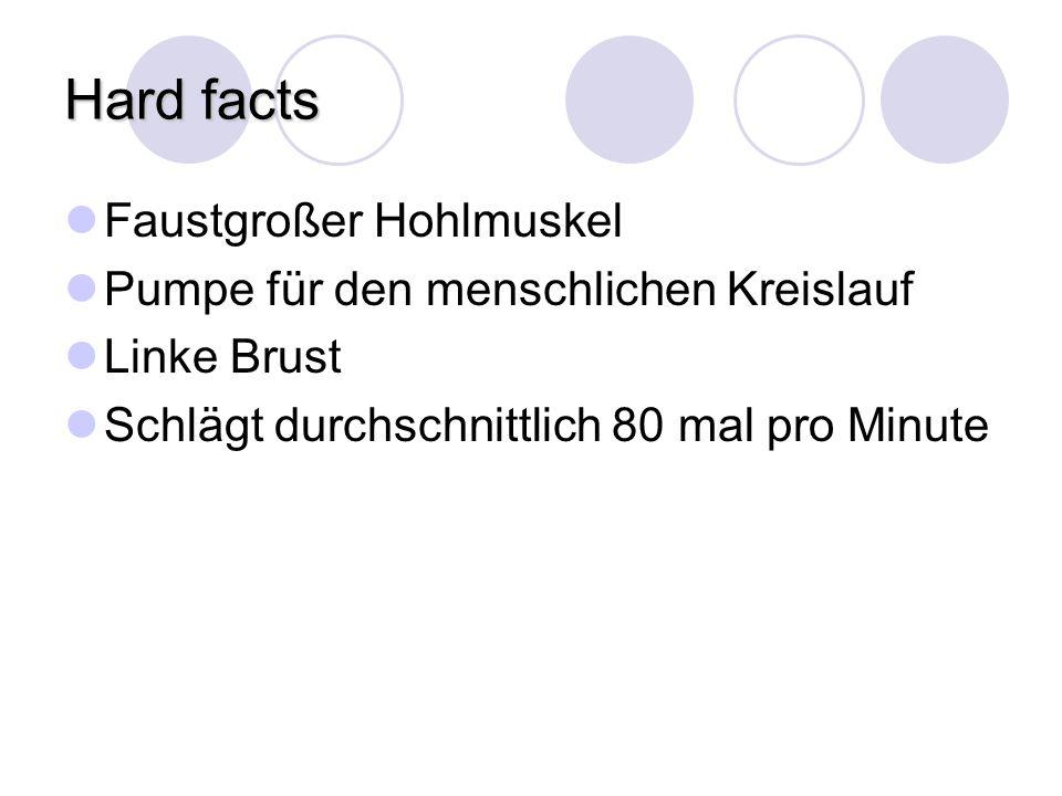 Hard facts Faustgroßer Hohlmuskel Pumpe für den menschlichen Kreislauf