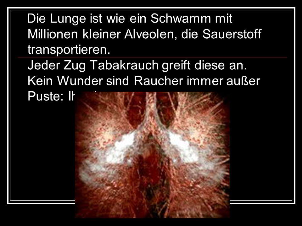 Die Lunge ist wie ein Schwamm mit Millionen kleiner Alveolen, die Sauerstoff transportieren.