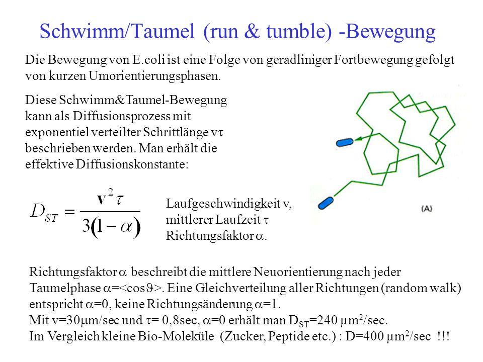 Schwimm/Taumel (run & tumble) -Bewegung