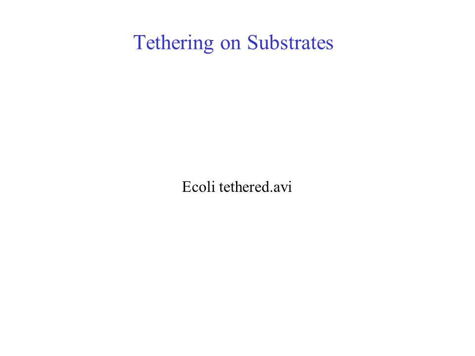 Tethering on Substrates