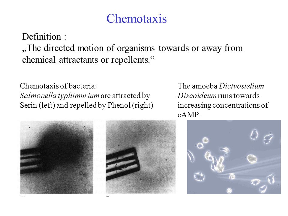 Chemotaxis Definition :