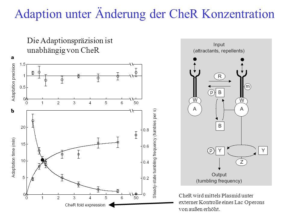 Adaption unter Änderung der CheR Konzentration