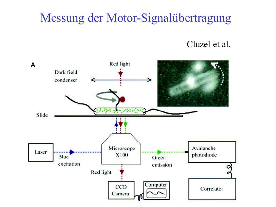 Messung der Motor-Signalübertragung