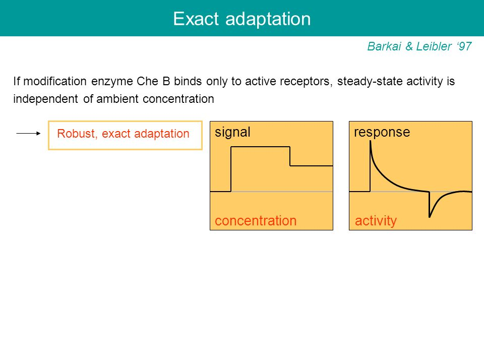 Exact adaptation signal response concentration activity
