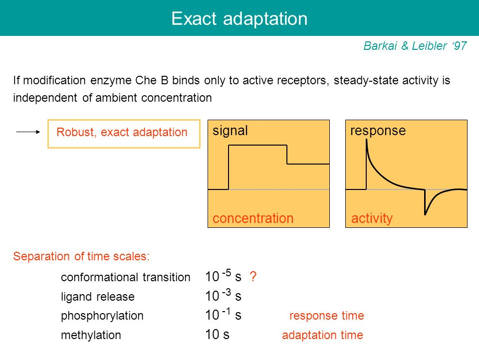 Exact adaptation signal response conformational transition 10 -5 s