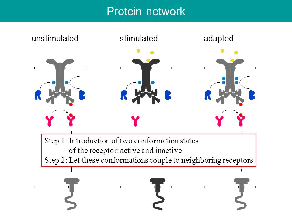 Protein network unstimulated stimulated adapted