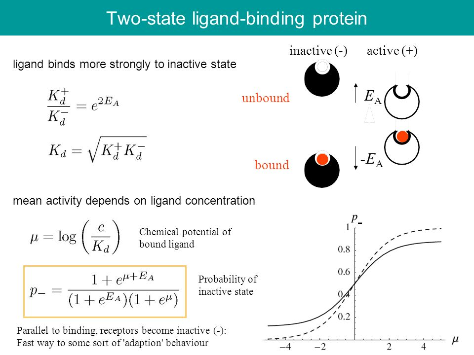 Two-state ligand-binding protein