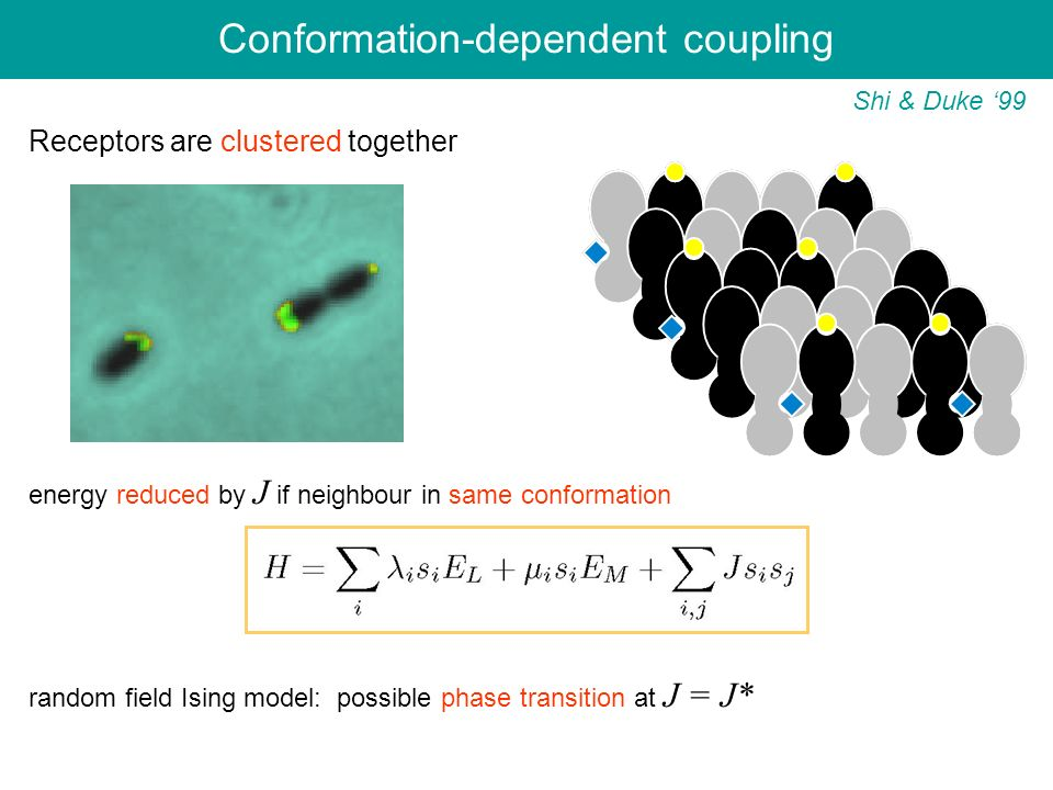 Conformation-dependent coupling