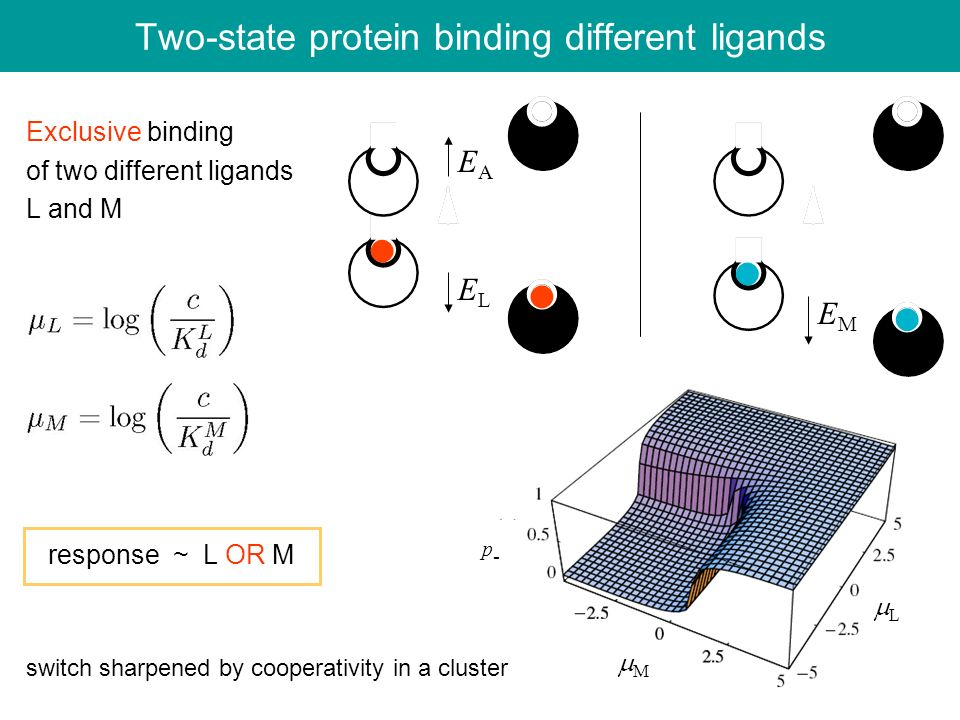 Two-state protein binding different ligands