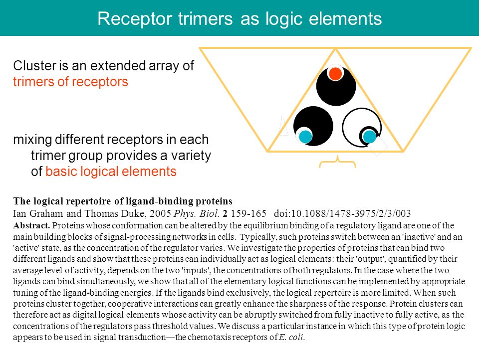 Receptor trimers as logic elements