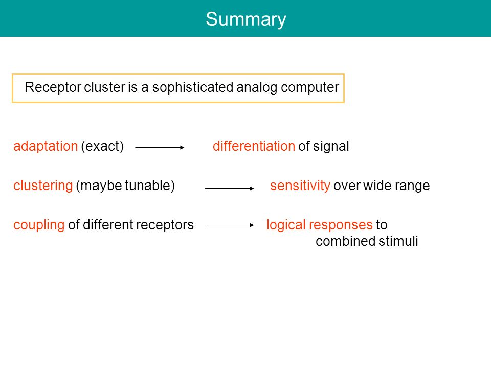 Summary Receptor cluster is a sophisticated analog computer