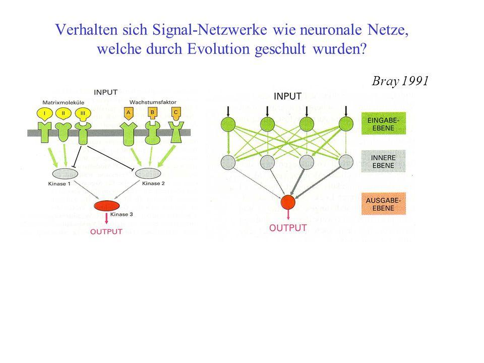 Verhalten sich Signal-Netzwerke wie neuronale Netze, welche durch Evolution geschult wurden