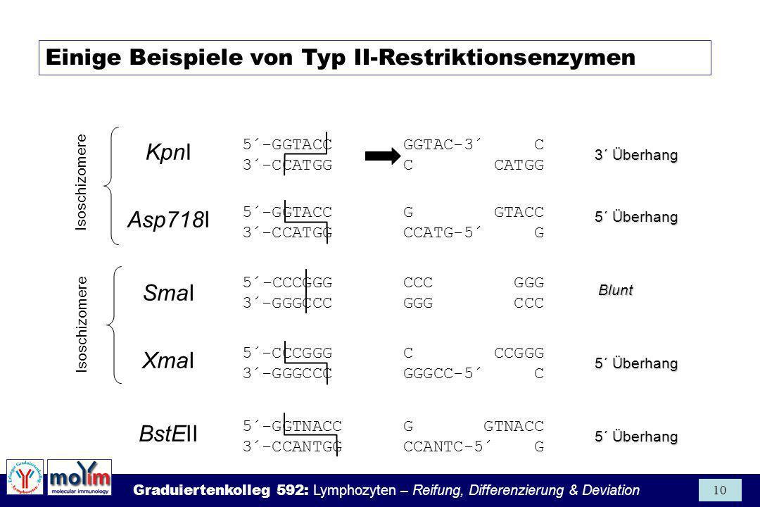Einige Beispiele von Typ II-Restriktionsenzymen