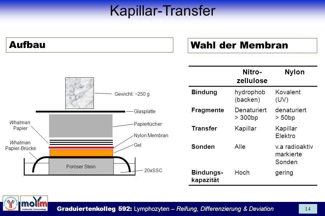 Kapillar-Transfer Aufbau Wahl der Membran Nitro-zellulose Nylon